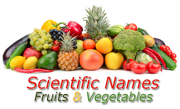 Scientific Names Fruits Vegetables