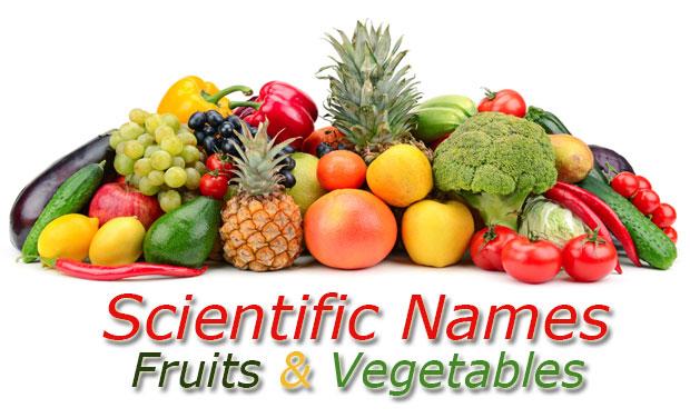 Scientific Names Fruits Vegetables