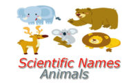 Scientific Names – Animals – Domestic and Wild