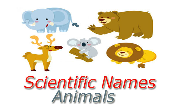 Scientific Names Animals