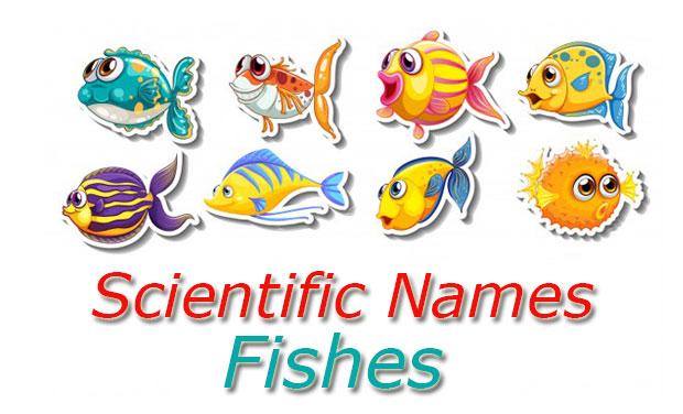 Scientific Names Fishes