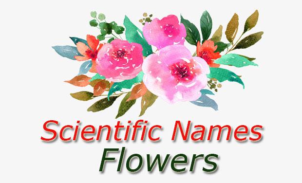Scientific Names Flowers