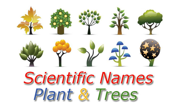 Scientific names plants and trees